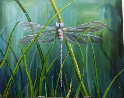 dragon-fly in the grass